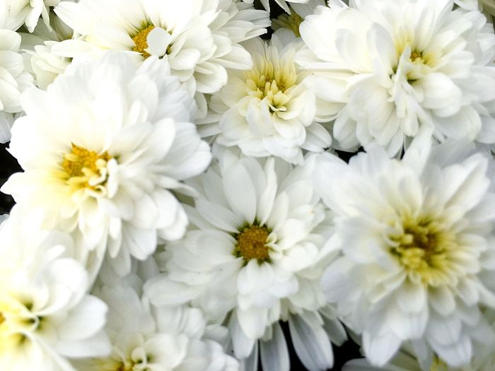 Flower Fragility White Color Beauty In Nature Flower Head Petal Freshness Nature No People Daisy Close-up Chrysanthemum Backgrounds Bouquet Full Frame Plant Yellow Springtime Day Outdoors
