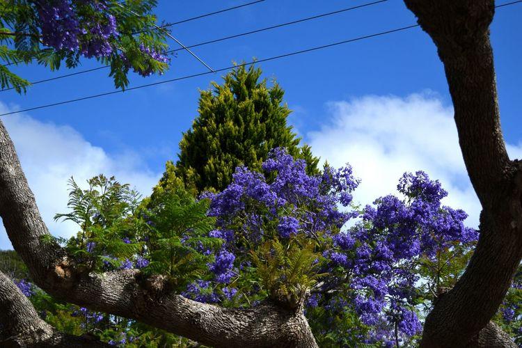 Tree Blue Cloud