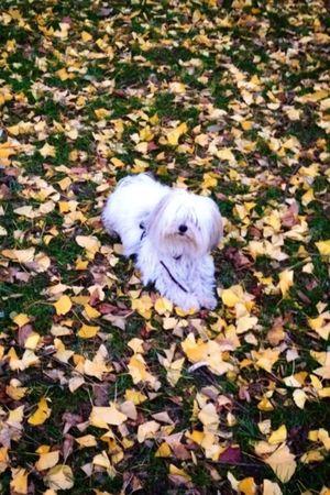 Autumn Colors Dog Cute Pets Nofilter