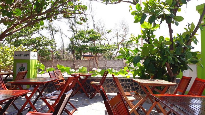 Plant Seat Chair Tree Nature Table No People Green Color Restaurant Outdoors Business Sidewalk Cafe Sunlight Day Furniture Wood - Material Architecture Empty Growth Absence