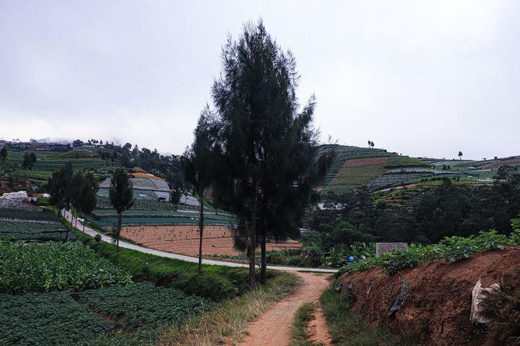 tree area EyeEm