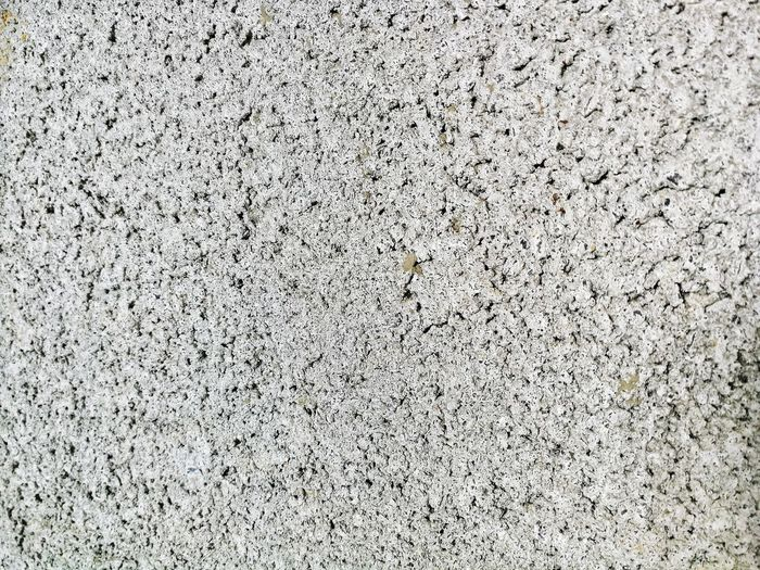 High angle view of ant on wall