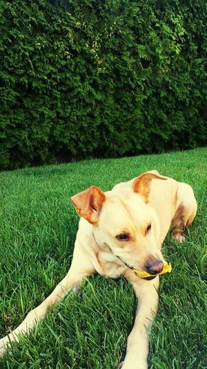 Taking Photos Enjoying Life Dog❤ My Beautiful Dog Summmer☀ Grass Dog In Grass 🐕 Beautiful Moment