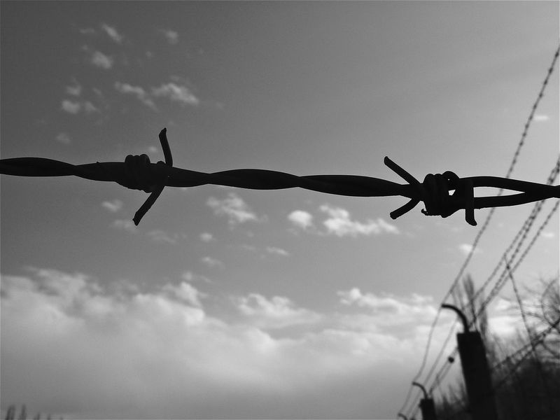 Alambrada Barbed Wire Barbed Wire Fence Black And White Blanco Y Negro Camp De Concentration Campo De Concentracion Campo De Concentração Concentration Camp Fence II Guerra Mundial Jews Kz NAZI Prision Protection Seconde Guerre Mondiale Wire World War II Zweiter Weltkrieg концлагерь معسكر إعتقال 強制収容所 集中營 포로 수용소