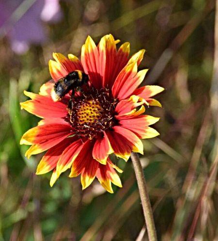 Flower Flowers Bees And Flowers Bee Beauty In Nature