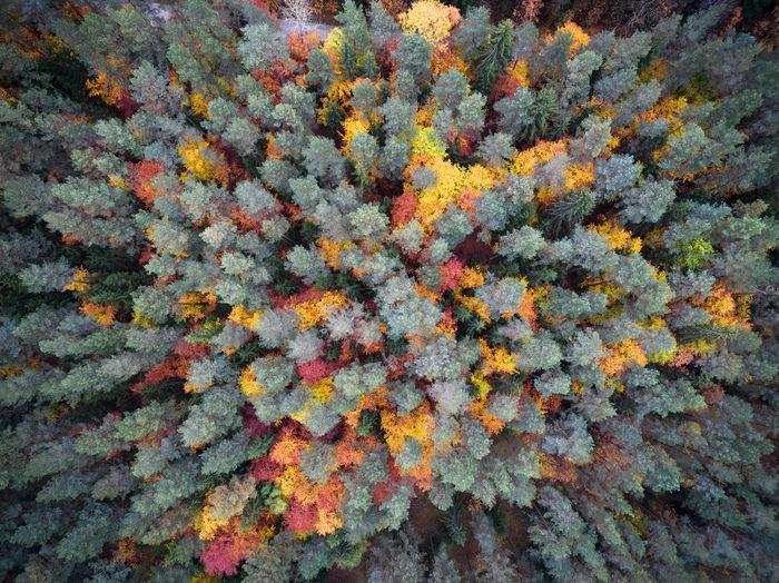 Full frame shot of orange flower tree