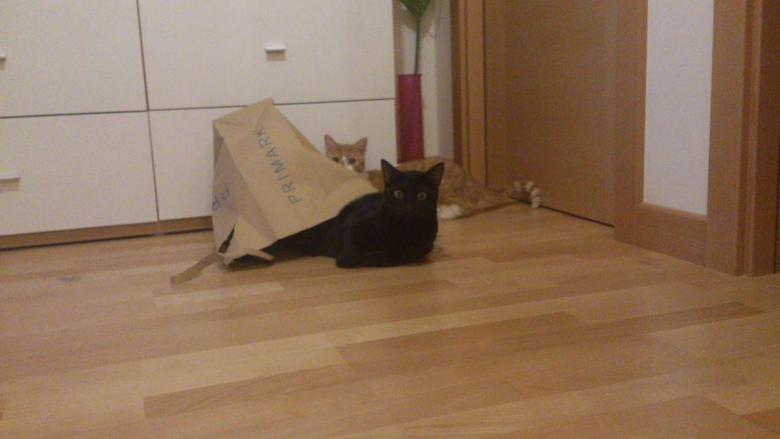 uyy disimula q nos han pillao !!! Gatos Gato Negro Cute Pets Cats