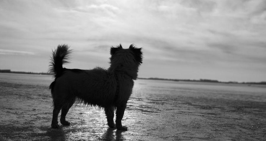 Animal Themes Landscape Dog Doggy Black & White Siluette