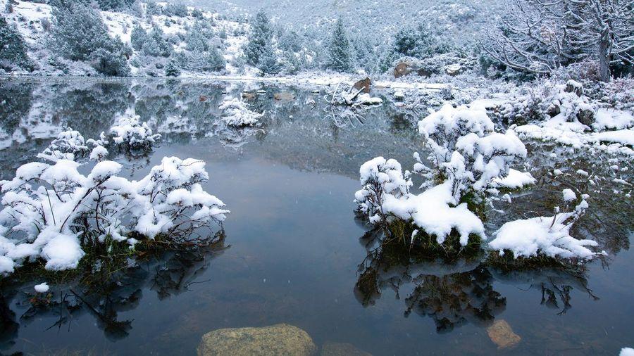 好心情(1) 好心情(1) Water Plant Reflection Beauty In Nature Tree Winter Nature