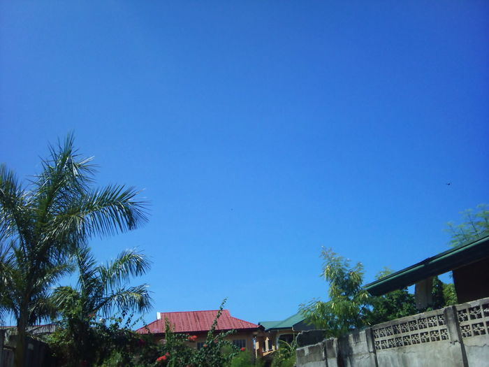 SUCH A BEAUTIFUL CLEAR BLUE SKY <3 (Taken Yesterday Afternoon) NoEditNoFilter