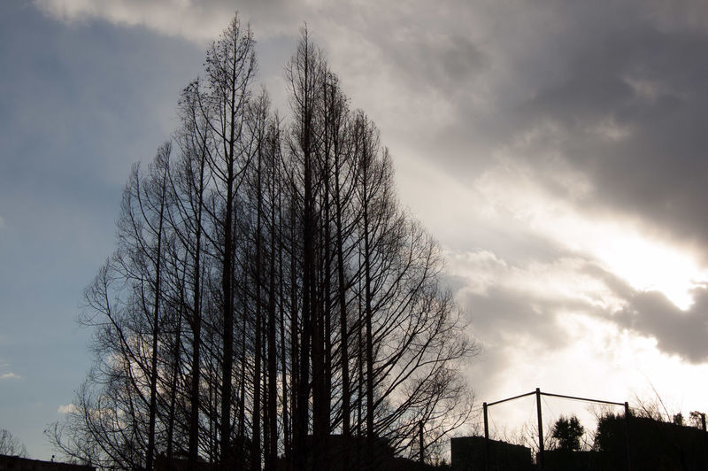 Bare Tree Bare