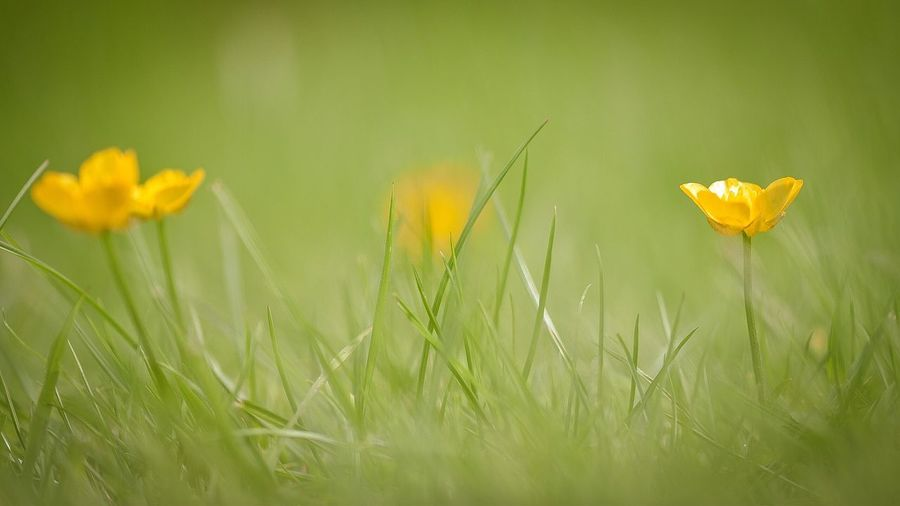 Close-up of flowers growing on field