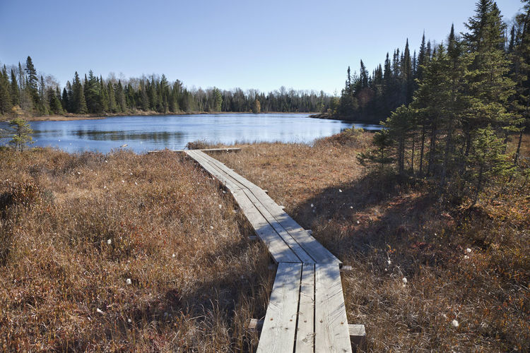 Wooden walkway leads to a small trout lake in northern Minnesota Tree Lake Beauty In Nature Outdoors No People Path Walkway Pine Tree Minnesota Woods Forest Superior National Forest North Trout Fishing Sunlight Autumn Fall Blue Photography Landscape Bog Wood - Material USA Small Recreational Pursuit