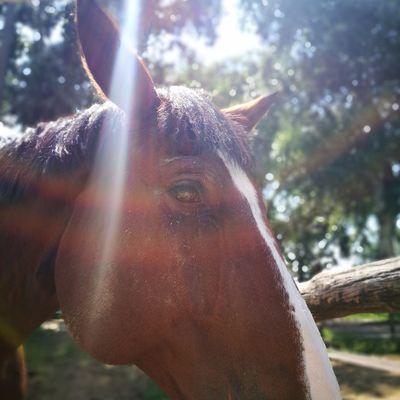 Light Tree Portrait Ear Close-up Animal Body Part Horse HEAD Animal Nose Horseback Riding Animal Eye