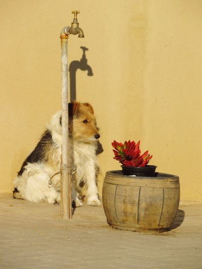 Dog Sitting Next To Flower Vase And Faucet