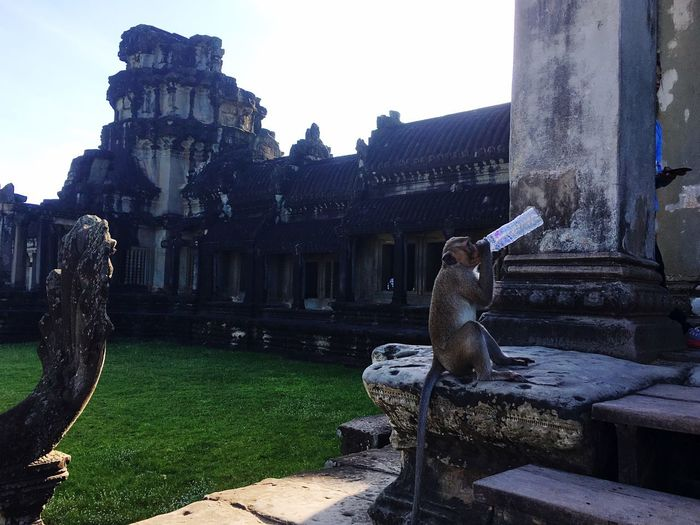 Monkey Drinking Monkey Statue Architecture Sculpture Building Exterior History Old Ruin Built Structure Travel Destinations Outdoors Day Ancient Religion Place Of Worship Spirituality Ancient Civilization No People Water Sky Animal Themes Mammal