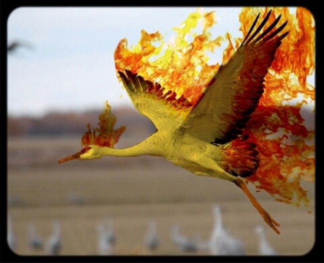 Pokemon♥♥♥♥ Pokemonphotography Moltres I seen one in Real life! lol Check This Out Pokemon!