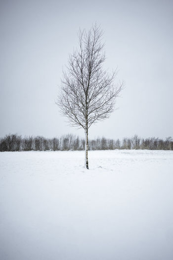 Stavanger White Out Winter Lonely Tree Lonely Tree In Field Sky Snow White Background