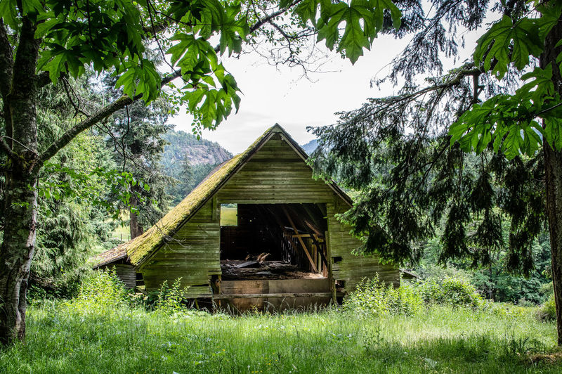 Abandoned house amidst trees on field in forest