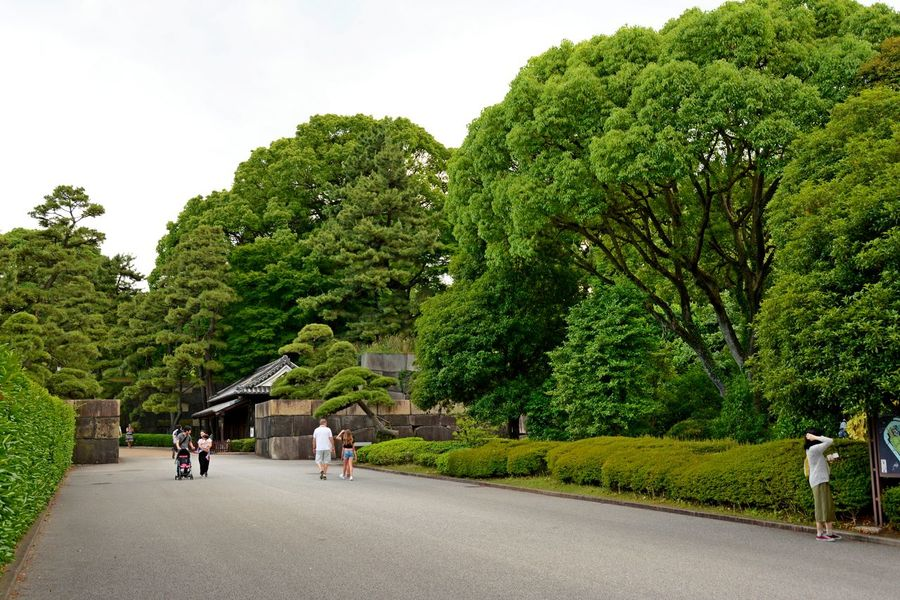 Imperial Palace Imperial Palace Garden Tokyo,Japan Day Garden Photography Green Color Growth Outdoors Park Tree Walking
