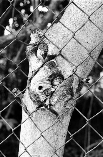 Location: Dr.-Kahlbaum-Allee Canon A-1 | APX 100 -> 200 | D-76 AgfaPhoto APX 100 (new) Black And White Blackandwhite Canon A-1 EyeEm Best Shots - Black + White Film Photography Kodak D-76 Monochrome