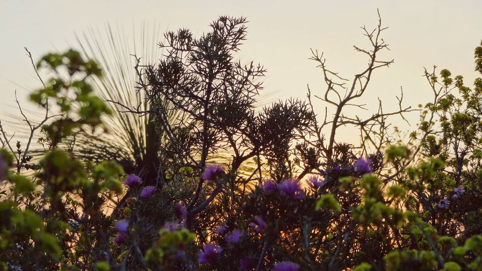 Diversity Australia Australian Outback Australian Landscape Landscape Flowers Wild Flowers Wildlife & Nature Taking Photos Travel Edge Of The World Sunset Sunset_collection Sunset Silhouettes Sunsets 43 Golden Moments RePicture Growth Nature