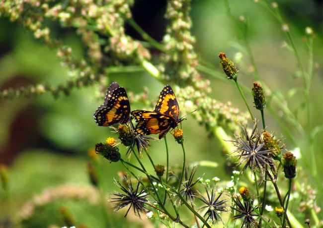 Animal Themes Animals In The Wild Botany Bugs Bush Butterflies Butterfly Butterfly ❤ Flower Focus On Foreground Fragility Growing Insect Insect Photography Insects  Leaves Nature Wildlife Yellow Flower Yellow Flowers