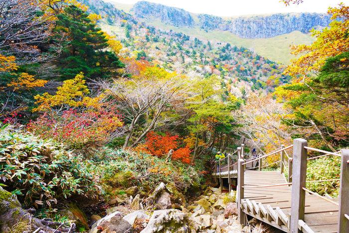 2013 Colorful Hallasan Mountain Jeju JEJU ISLAND  Leaves Mountain Nature Outdoors Outumn Scenery Tree Trekking カンナ山 チェジュ島 ハルラ山 済州島 漢拏山 登山 紅葉 韓国 단풍 제주도 한라산
