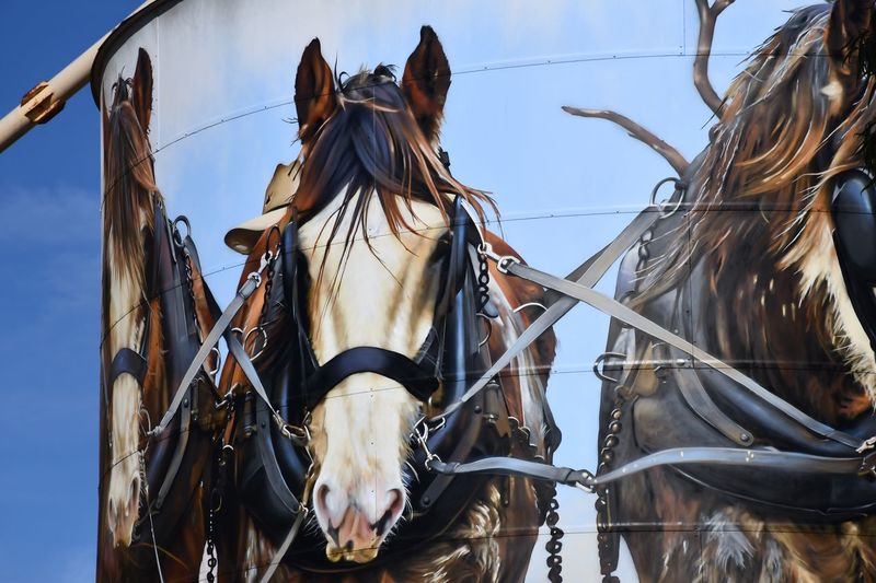 Silo Art Trail, Goorambat Silo Art Horse Clydesdales  EyeEm Selects Animal No People Sky Nature Day Horse Animal Themes Low Angle View Transportation Outdoors Domestic Domestic Animals Mammal Livestock Mode Of Transportation Focus On Foreground Close-up Bridle