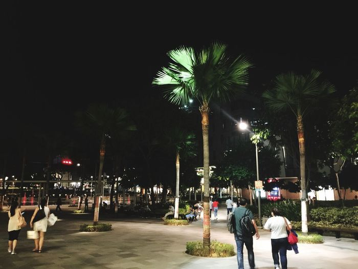 Uneventful Tree Real People Night City Group Of People Street Plant
