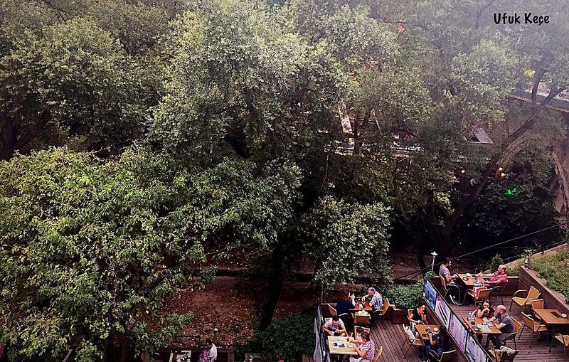 Myobjective Tree High Angle View Nature
