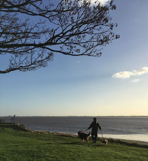 Tree Nature Water Sea Tranquil Scene Outdoors Two Dogs Dogwalker Hull 2017 City Of Culture 2017 Winter Blue Sky River Humber