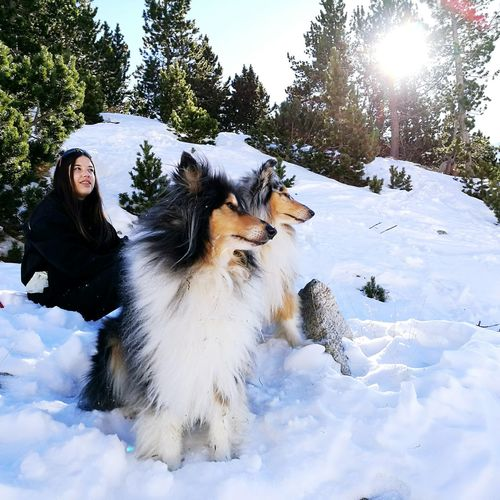 Sunlight Adventure Beauty In Nature Clear Sky Sky Tree Nature Cold Temperature Animal Themes Mountains 2017 New Year Snow Capture The Moment Real People Snow Sports Young Women Ski Holiday Domestic Animals Finding New Frontiers Pet Portraits