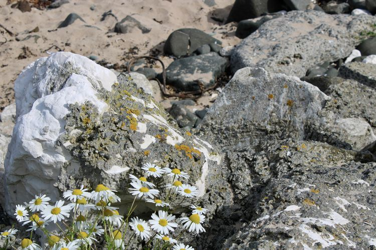 High angle view of white flowering plant on rock