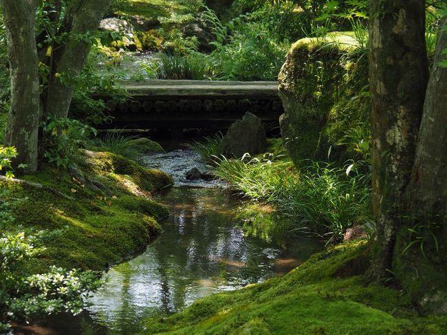 Kyoto Japan Arashiyama Hogonin Temple Garden Green Tree River Water Outdoors Beauty In Nature Day Growth Healing Silence Olympus PEN-F 京都 日本 嵐山 宝厳院 獅子吼の庭