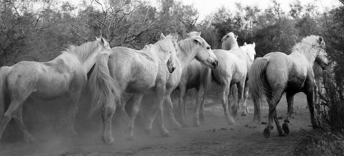 Horses walking on field