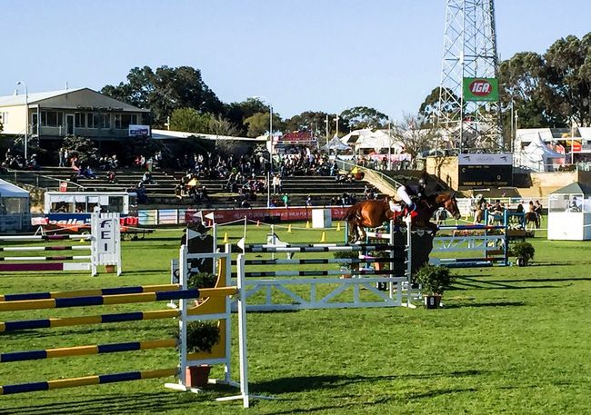 Horse Hurdles Outdoors Riding Competitive Sport Australia Equine Equestrian Horse Riding Hurdles Rider Showjumping Competition September 25, 2016 Royal Show Horse Western Australia Perth Jumping Sport Farm Animal Animal Themes Lifestyles Event Domestic Animals Animal Fun