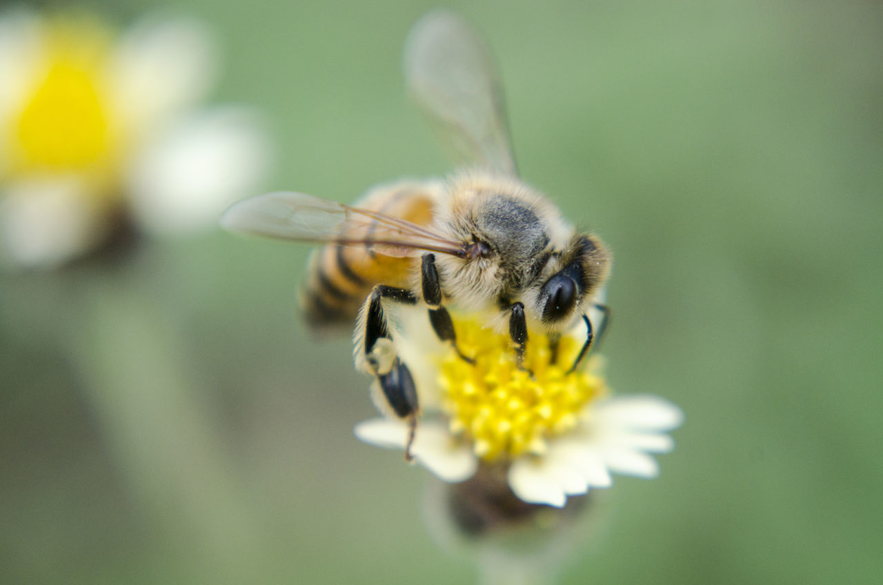 Animal Themes,  Animal Wildlife,  Animals In The Wild,  Beauty In Nature,  Bee