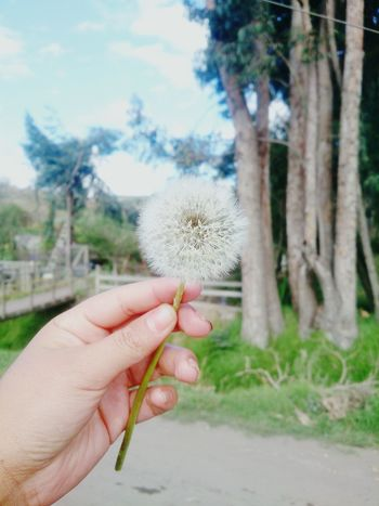 Naturaleza🌾🌿 Beauty In Nature One Person Nature Flower Tree Adults Only Human Hand Flower Head Day Fragility First Eyeem Photo Love Human Body Part Close-up Outdoors Sky Freshness Adult People Only Women