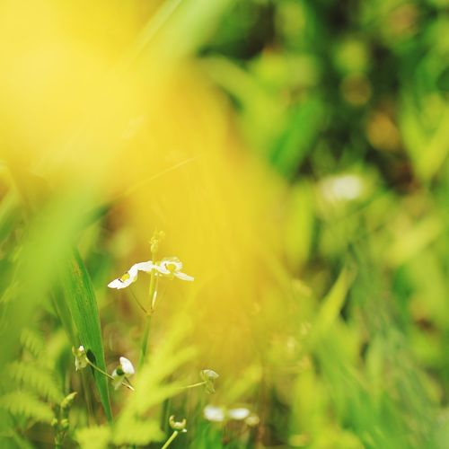 野草 Flower Defocused Flower Head Rural Scene Beauty Springtime Summer Uncultivated Meadow Leaf Wildflower In Bloom Botany Focus