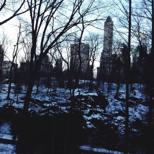 Manhattan Lovenyc CentralPark NYC Photography Mysterious IloveIT ♡ Where Does It Lead? Snow ❄ Lanscape #trees #sunset #wood #winter #sky