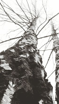 Black And White Photography Nature Textures Tree Art
