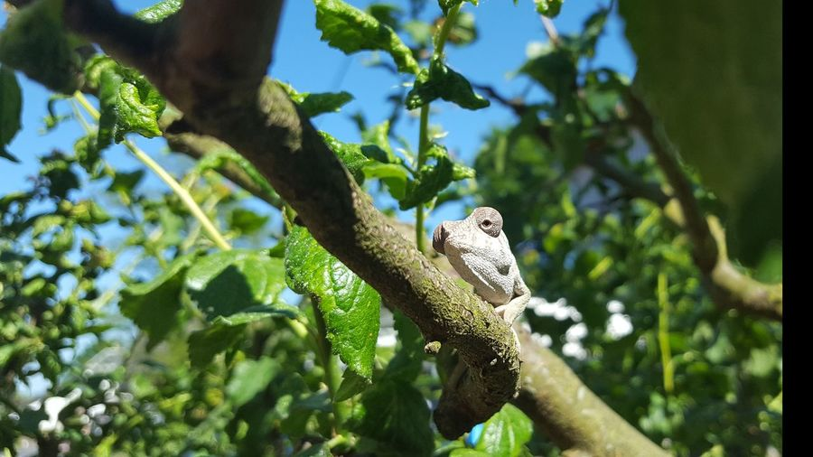 Chameleon Sitting On A Tree Sunbathing Animals In The Wild One Animal Tree Branch Nature No People Outdoors Reptile Beauty In Nature Blue Sky Sunlight Green Leaves