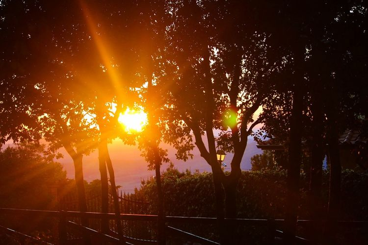 Sunset Tree Sun Outdoors Nature Sunlight Landscape Beauty No People Tranquility