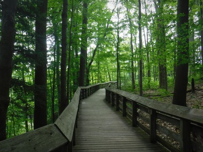Natue Forest Trees Path Nature Path Park Walkway EyeEmNewHere Pet Portraits