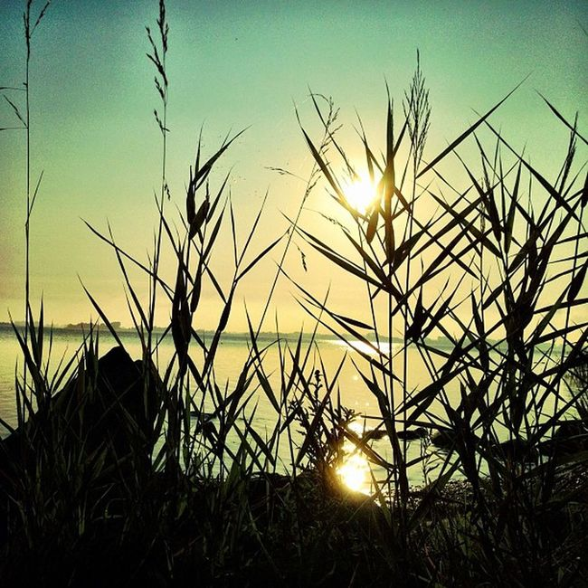 #magic #sunrise Baltic Sea Iphoneonly Followback WOW Great Sea Follow Beach All_shots Sun 10likes Sunset Baltic Morning 20likes Sunrise Instapic Love Instafun Cool Magic Blue Fanpage Enjoy Amazing