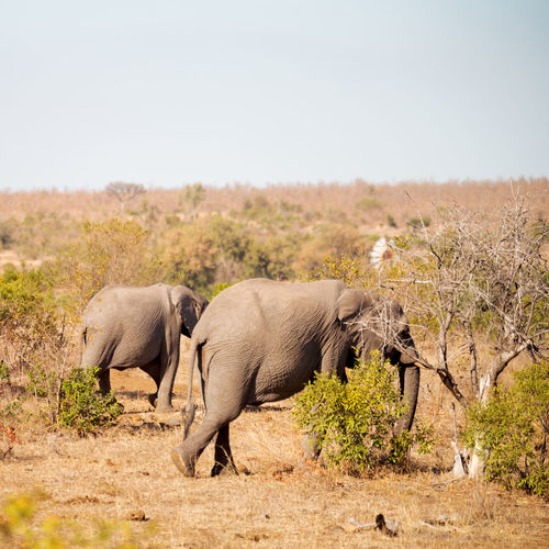 View of elephant on land