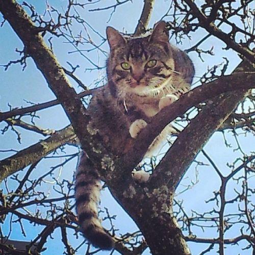 Halden Spring Sun Home Norway cat