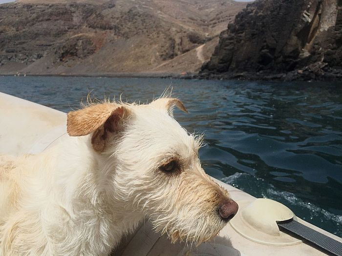 EyeEmNewHere EyeEm Selects Baydog Dogtor Sea Lanzarote PlayaquemadaWater One Animal Outdoors Nofilter Pets Day No People Animal Themes Dog Golden Retriever Mammal Domestic Animals Nature Close-up Sky Pet Portraits
