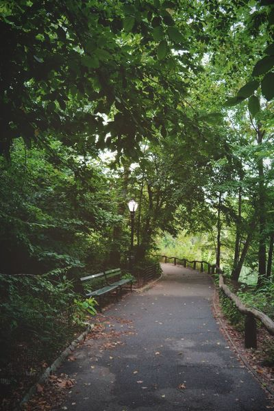 Moments in Central Park CentralPark Enter Tree Nature Growth Tranquility Forest No People Outdoors Branch Beauty In Nature The Way Forward Day Scenics